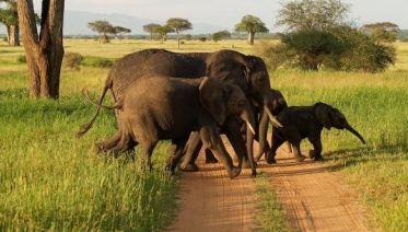 1 Day's Safari in Tarangire National Park, start Arusha