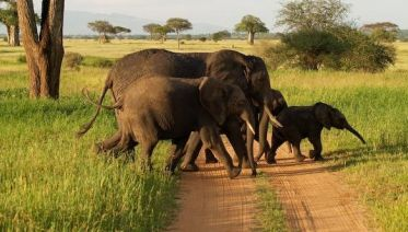 1 Day Safari in Tarangire National Park, start Arusha