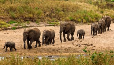 1-Day Safari To Tarangire National Park