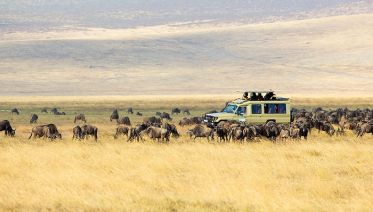 10 Day Serengeti Wildebeest Migration Tracking Safari