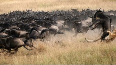 10 DaysTanzania Wildebeest Migration June- February