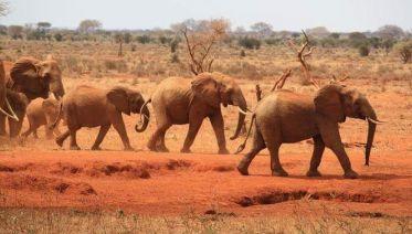 13 Day Legendary Expedition Safari