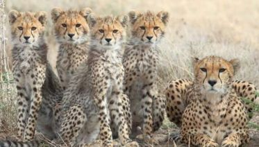 13 Days-The Great Safaris Of Tanzania