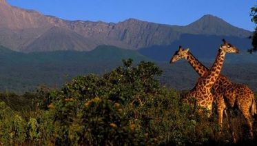 15-Day Family Tour Extravaganza to Tanzania