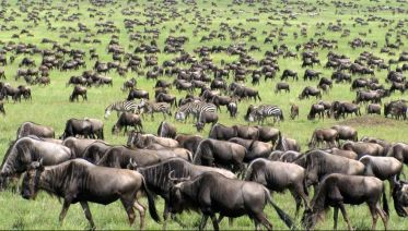 16 Days Kenya Safari