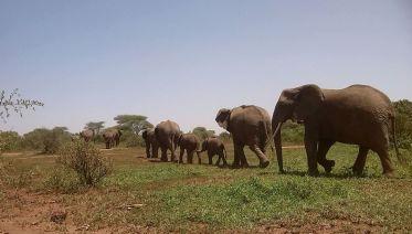2 Day Safari Tarangire & Ngorongoro