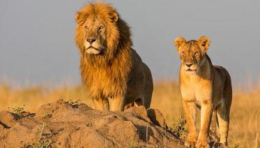 2-Day Tanzania Camping Safari