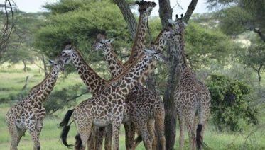 2-Day Tanzania Safari