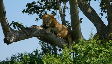 2 Day Tour of Queen Elizabeth National Park