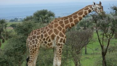 2-Day Trip To Murchison Falls National Park