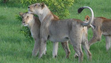 2 Days Mikumi Safari