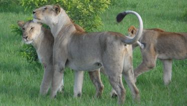 2 Days  Mikumi Standard  Safari