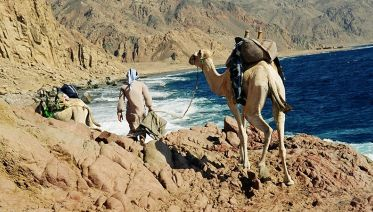 2-Hour Camel Safari
