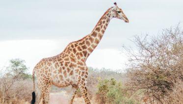22 Day Zanzibar, Victoria Falls & Kruger 2019-20