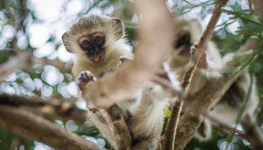3-day Classic Kruger Park Safari