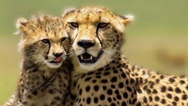 3 Day Maasai Mara Budget Adventure Safari