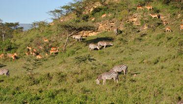 3 Days Kenya Budget Safari Masai Mara