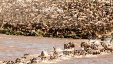 3-Day Maasai Mara Joining Group Budget Camping Safari