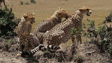3 Days 2 Nights Maasai Mara National Park Safari