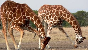 3 Days Joining Safari in Maasai Mara National Reserve
