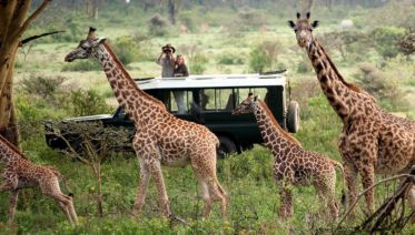 3 Days Maasai Mara Safari - All Inclusive