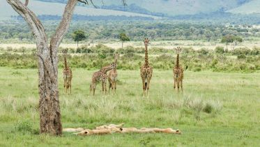 3 Days Masai Mara Safari in Kenya