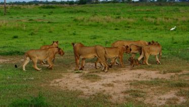 3 Days Mikumi National Park Safari