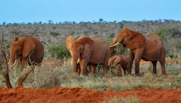Tsavo West National Park Tours