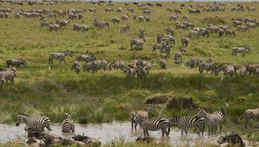 3 Days - Tanzania Ndutu Safari: Three Days