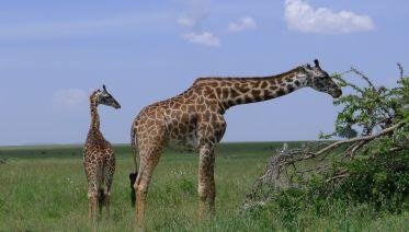 3Days / 2Nights: Wildlife Safari & Cultural Tour