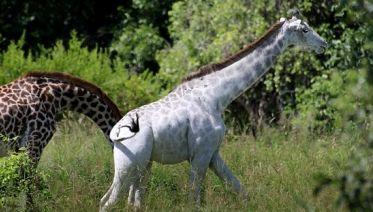 3N/4D Classic African Game Safari