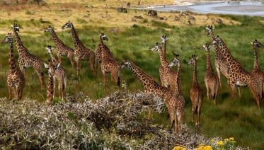 4-Day Budget Camping & Walking Safari In Tanzania