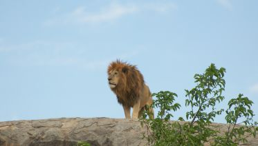 4 Day Lodging Tarangire, Serengeti & Ngorongo