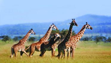4-Day Tanzania Safari