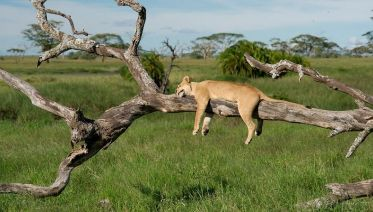 4 Days 3 Nights Amazing Tanzania Safari Experience