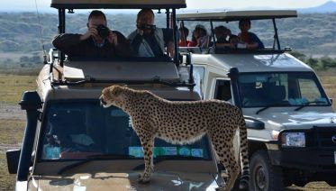 4 Days Budget Safari - Tarangire, Serengeti & Ngorongoro