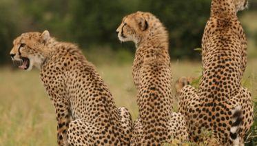 4 Days Hakuna Matata Safaris