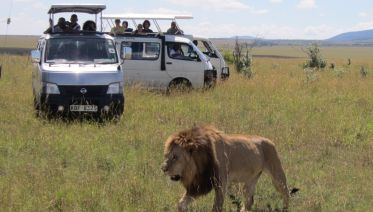 4 Days Masai Mara and Lake Nakuru Budget Travel