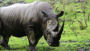 4 Days Masai Mara Lake Nakuru Safari Tour