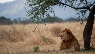 4 Days Pumba Safari in Serengeti & Ngorongo
