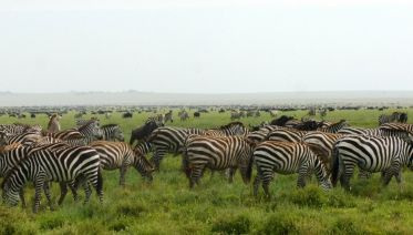 4 Days Safari Ngorongoro and Serengeti National Parks