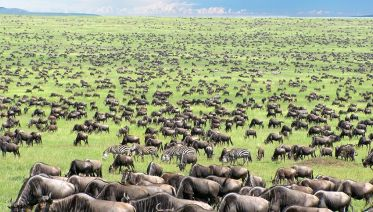 4 Days Serengeti Wildlife Migration Budget Tour