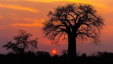 4-Days Tanzania Safari