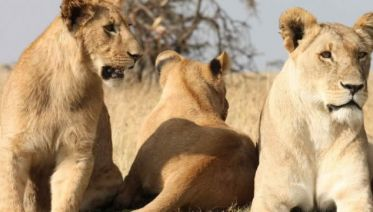 4days/3nights Maasai Mara And Lake Nakuru Group Safari