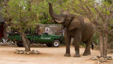 Kruger National Park Tours