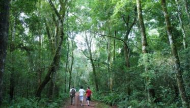 5-Day Puerto Iguazu Adventure Tour