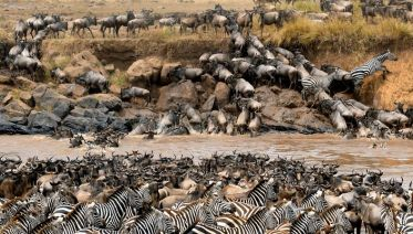 5-Day Safari to Serengeti National Park - Fly-in Express