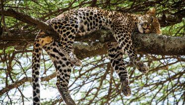 5-Day Tanzania Safari