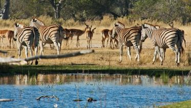 5 Days 4 Nights Okavango Delta Tour
