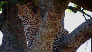 5 days 4 nights safari
